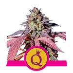 RQS_USA_PurpleQueen